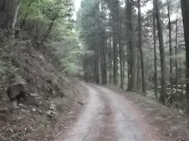 子持神社 奥の院への道