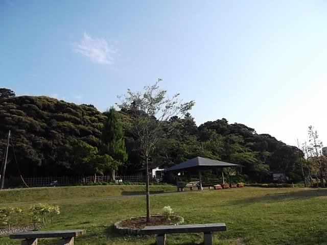 泉が森公園