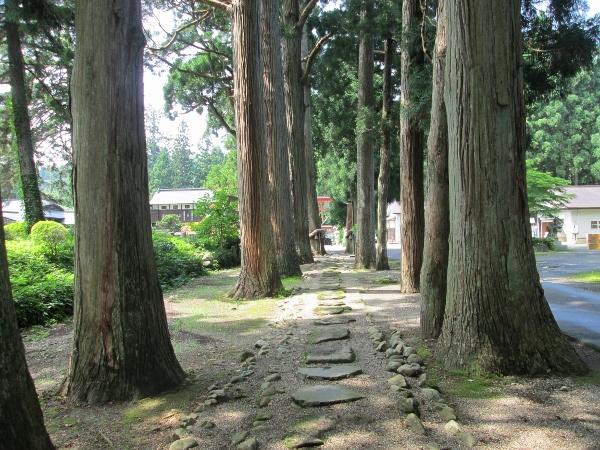 唐松神社 杉並木