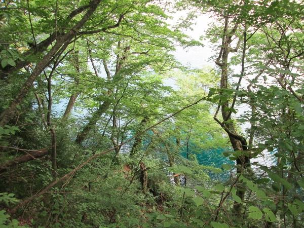 十和田神社 占場