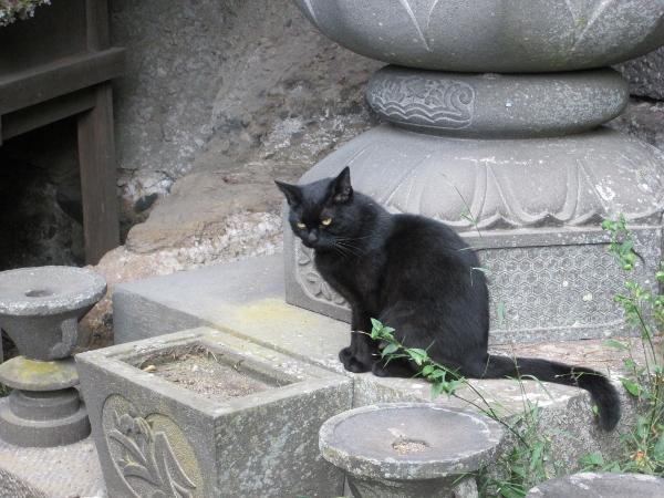 黒猫の見送り
