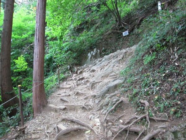 弥彦山登山道