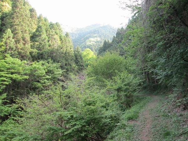奥の院への道
